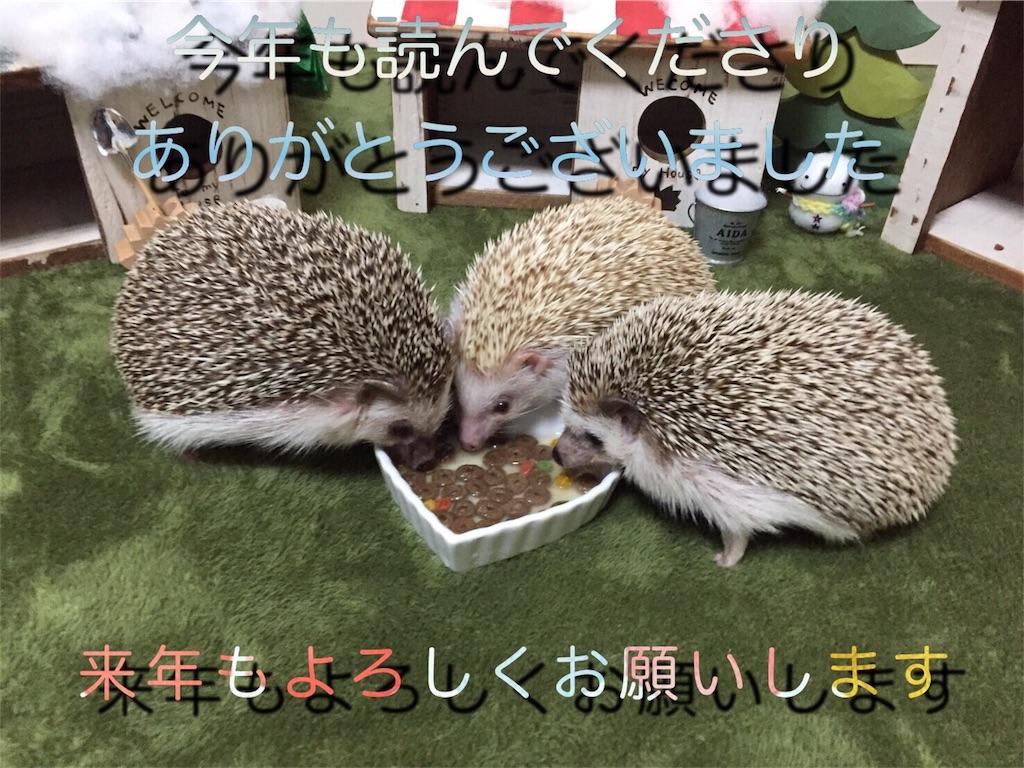 f:id:hedgehog_chacha:20161227151149j:image