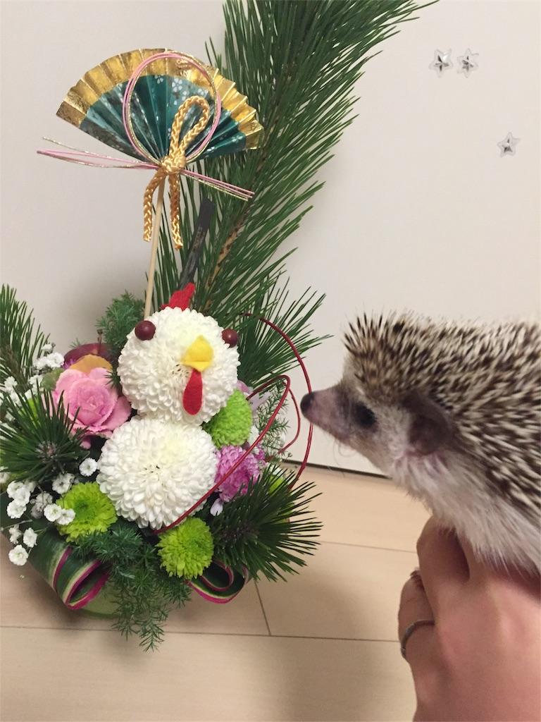 f:id:hedgehog_chacha:20170101183441j:image