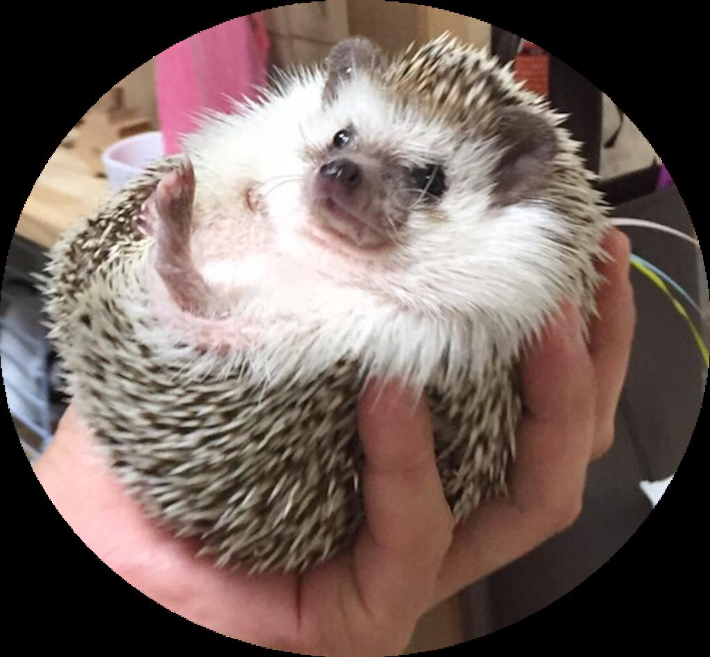 f:id:hedgehog_chacha:20170109211127p:image
