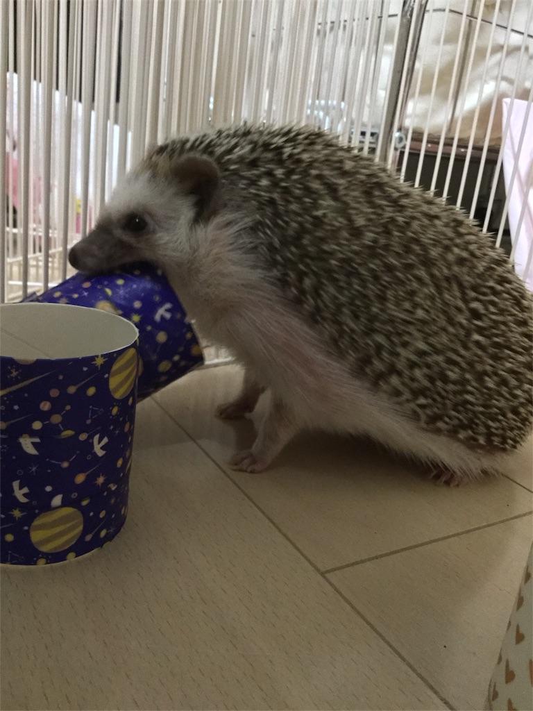 f:id:hedgehog_chacha:20170128210131j:image