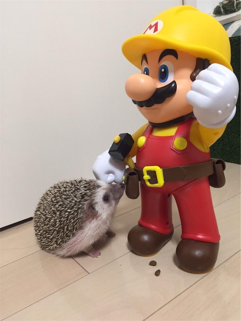 f:id:hedgehog_chacha:20170220163739j:image