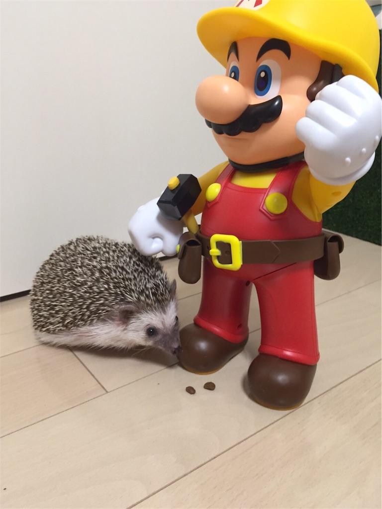 f:id:hedgehog_chacha:20170220164652j:image