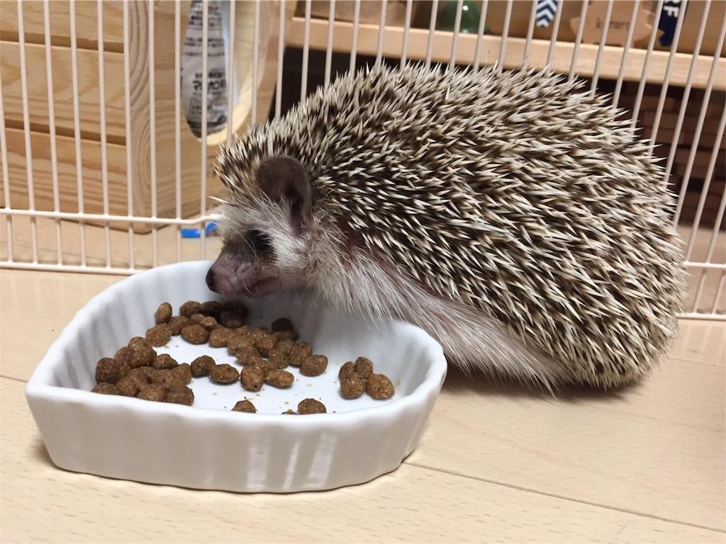 f:id:hedgehog_chacha:20170220213514j:image