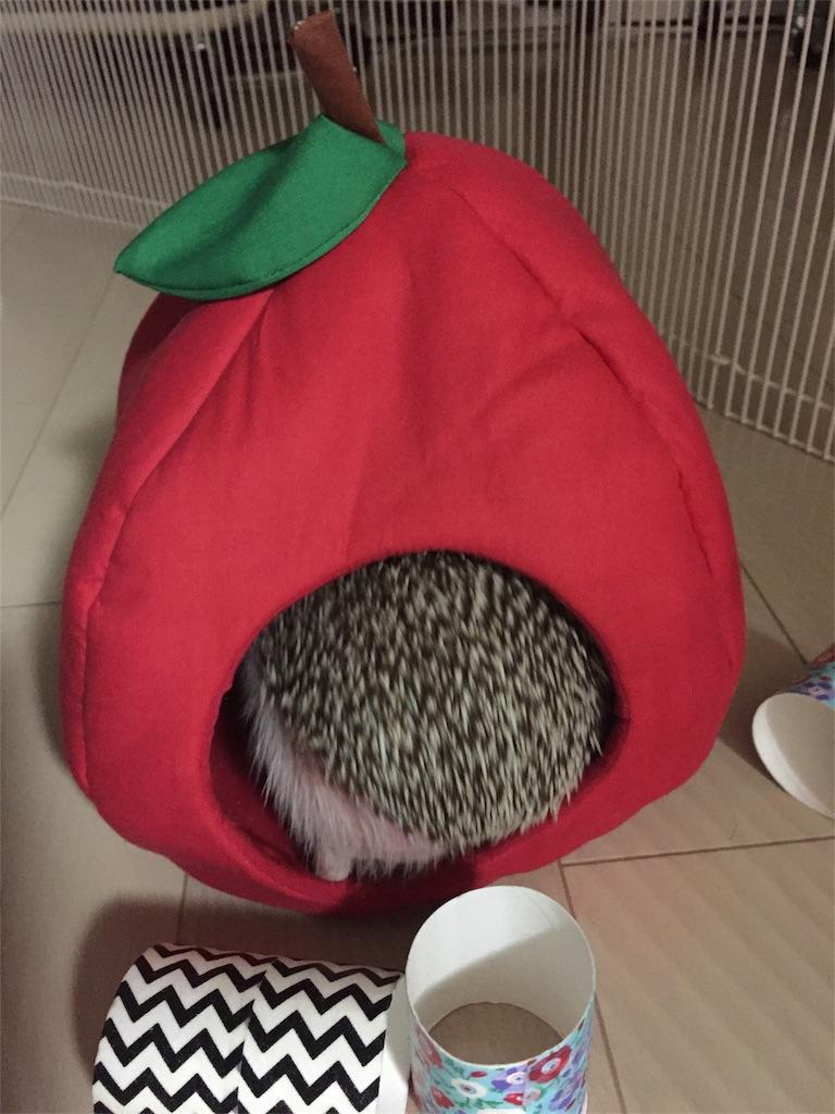 f:id:hedgehog_chacha:20170419141021j:image