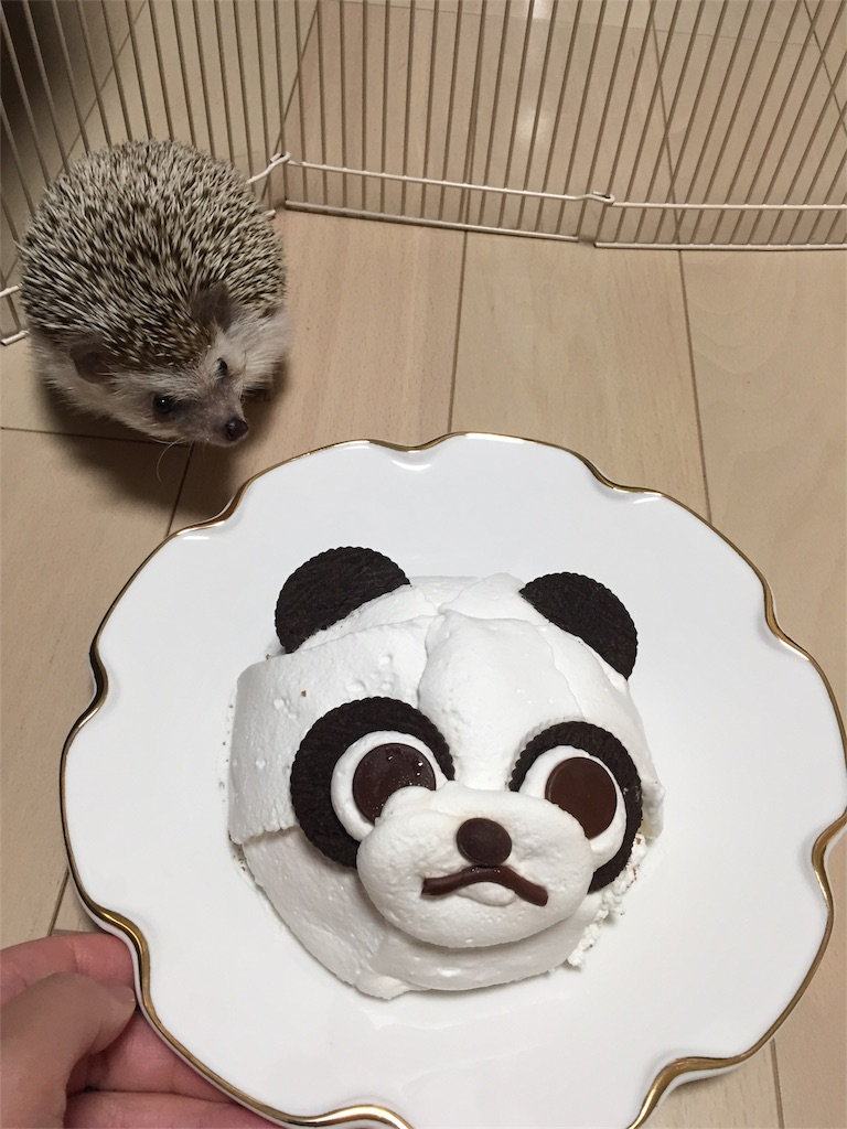 f:id:hedgehog_chacha:20170529154609j:image