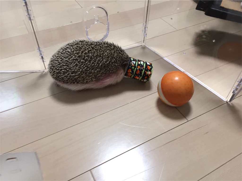f:id:hedgehog_chacha:20171031203033j:image