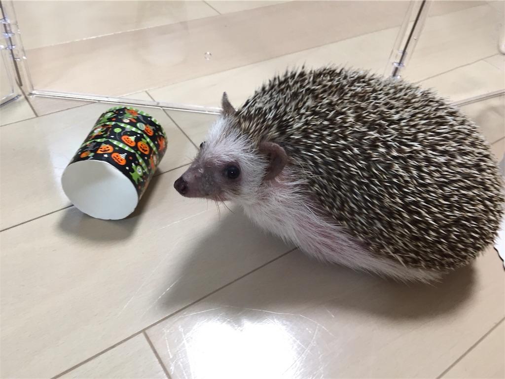 f:id:hedgehog_chacha:20171031203100j:image