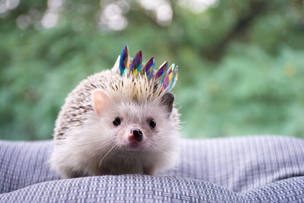 f:id:hedgehogweeklyreport:20190220004006j:plain