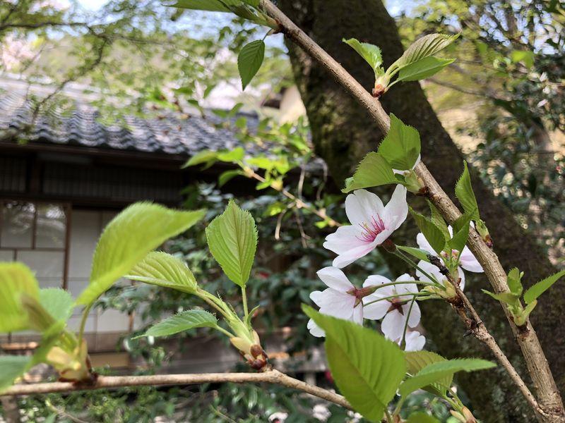 f:id:heihachi-jaya:20180408133658j:image:w360