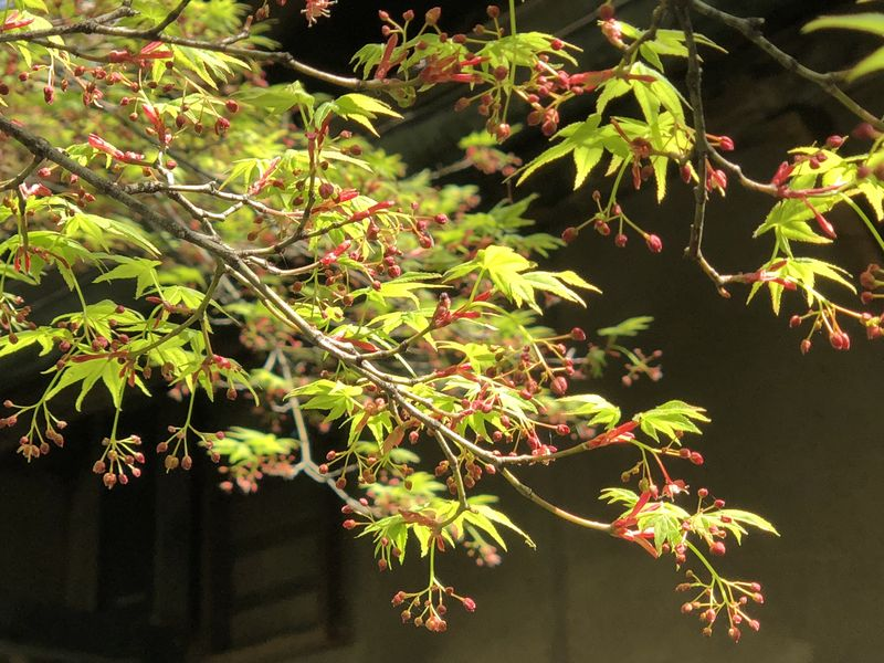 f:id:heihachi-jaya:20180408133815j:image:w360