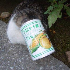 f:id:hekigyokuan:20050129054528:image