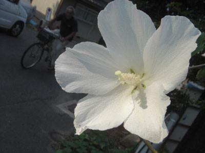 f:id:hekigyokuan:20050810232908j:image