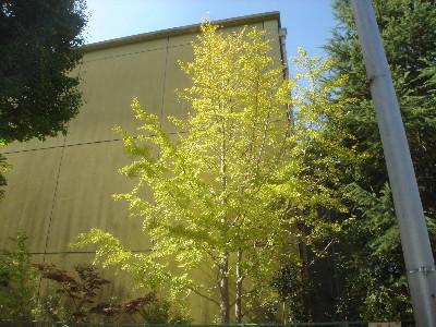 f:id:hekigyokuan:20051024152807j:image