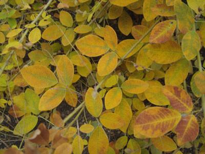 f:id:hekigyokuan:20051116111044j:image