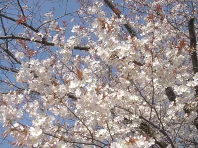 f:id:hekigyokuan:20060404112533j:image