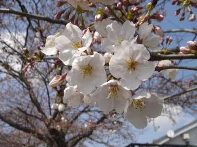 f:id:hekigyokuan:20060404112725j:image