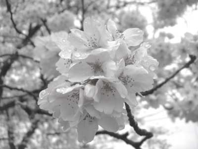 f:id:hekigyokuan:20060410140721j:image