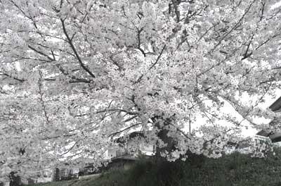f:id:hekigyokuan:20060414155009j:image