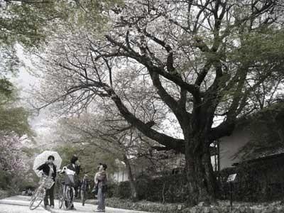 f:id:hekigyokuan:20060416235022j:image