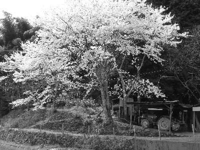 f:id:hekigyokuan:20060420122848j:image