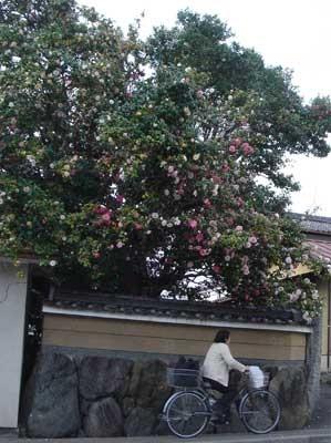 f:id:hekigyokuan:20060425180639j:image
