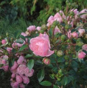 f:id:hekigyokuan:20060912110301j:image
