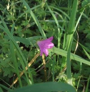 f:id:hekigyokuan:20060912110428j:image