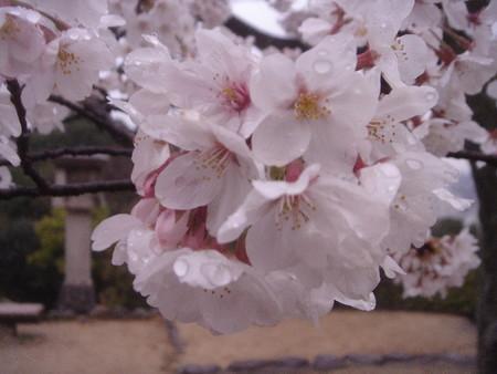 f:id:hekigyokuan:20070407181052j:image