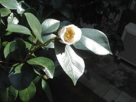 f:id:hekigyokuan:20071106203659j:image