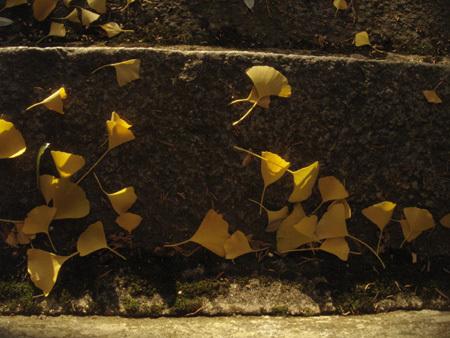 f:id:hekigyokuan:20071120142226j:image