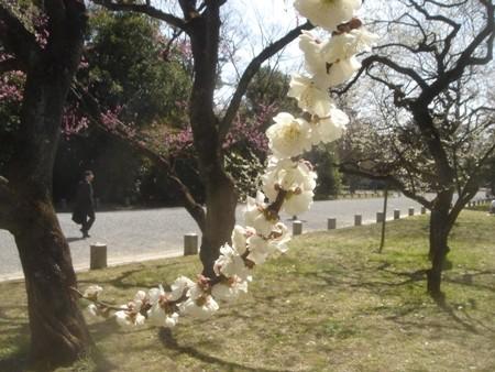 f:id:hekigyokuan:20080318114450j:image