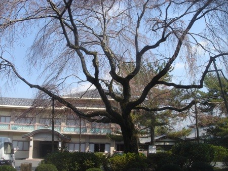 f:id:hekigyokuan:20080325101017j:image
