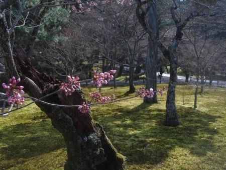 f:id:hekigyokuan:20080325101527j:image