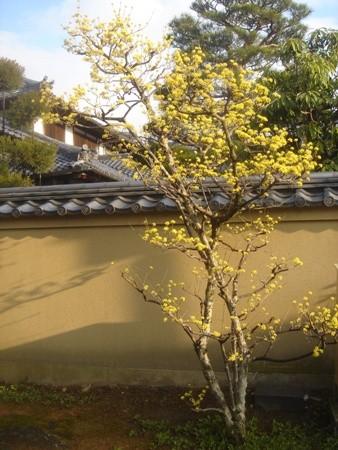 f:id:hekigyokuan:20080327071241j:image