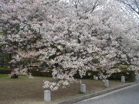 f:id:hekigyokuan:20080414115307j:image