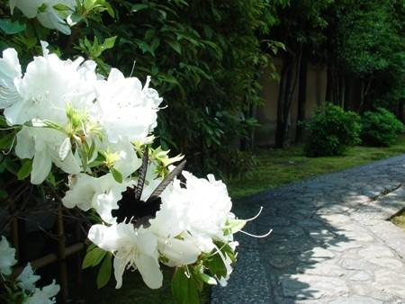 f:id:hekigyokuan:20080513115741j:image