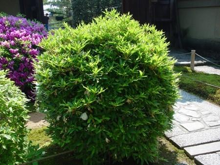 f:id:hekigyokuan:20080516091822j:image
