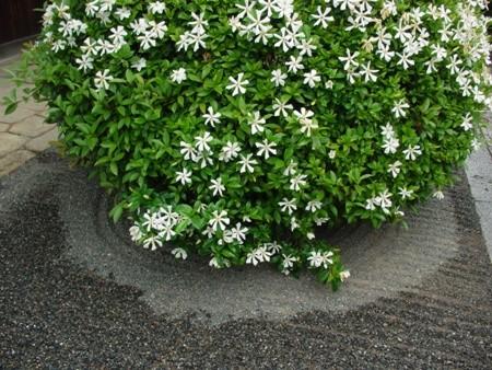 f:id:hekigyokuan:20080619104642j:image