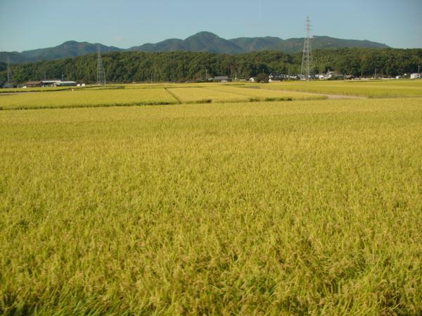 f:id:hekigyokuan:20081017232519j:image
