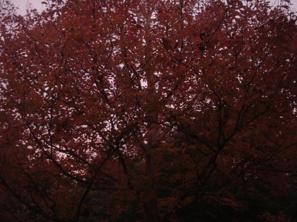f:id:hekigyokuan:20081111184931j:image