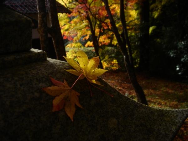 f:id:hekigyokuan:20081125224842j:image