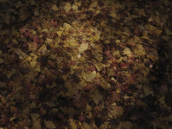 f:id:hekigyokuan:20081125224849j:image