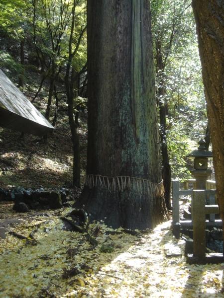 f:id:hekigyokuan:20081125224850j:image