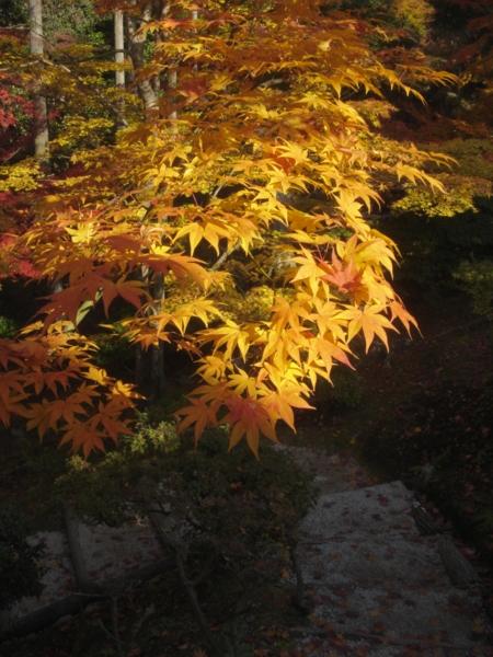f:id:hekigyokuan:20081202175842j:image