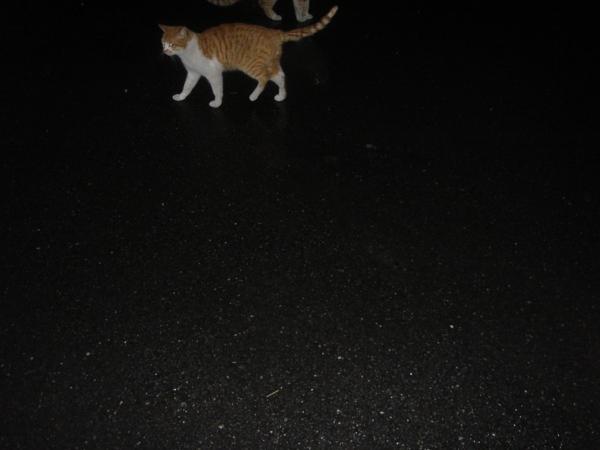 f:id:hekigyokuan:20090222230635j:image