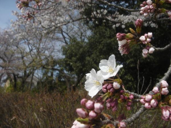 f:id:hekigyokuan:20090403134627j:image