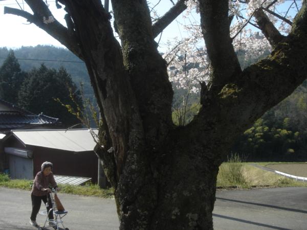 f:id:hekigyokuan:20090410151847j:image