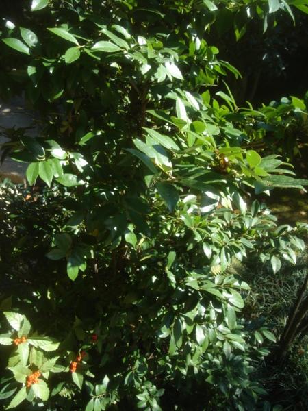 f:id:hekigyokuan:20091208111150j:image