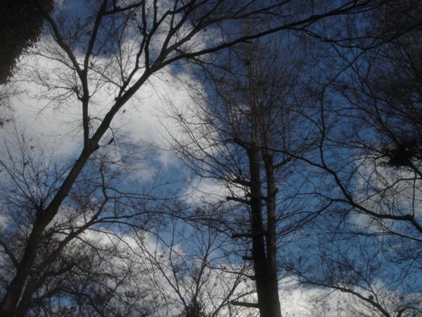 f:id:hekigyokuan:20091220142347j:image