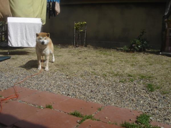 f:id:hekigyokuan:20100311121817j:image
